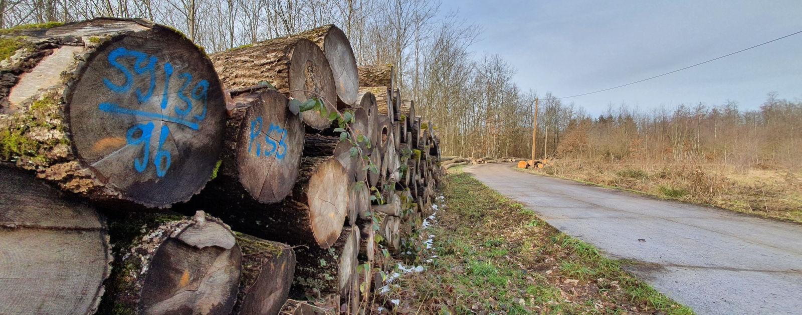 Holz gelagert am Wegrand im Wald