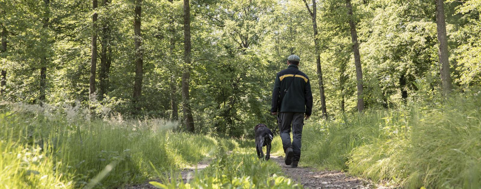 Gemeinde Förster mit Hund läuft auf Waldweg durch den Wald