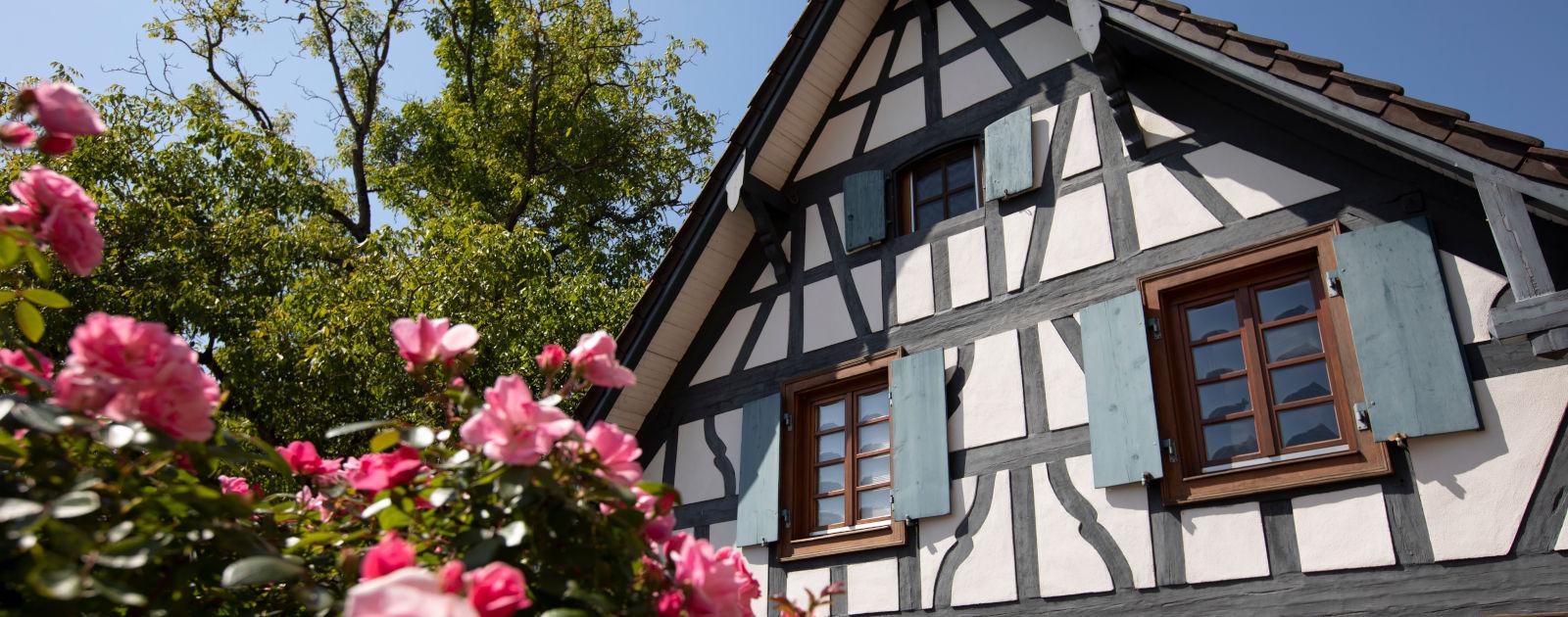Hesselhurst - Fachwerkhaus mit Rosen im Vordergrund