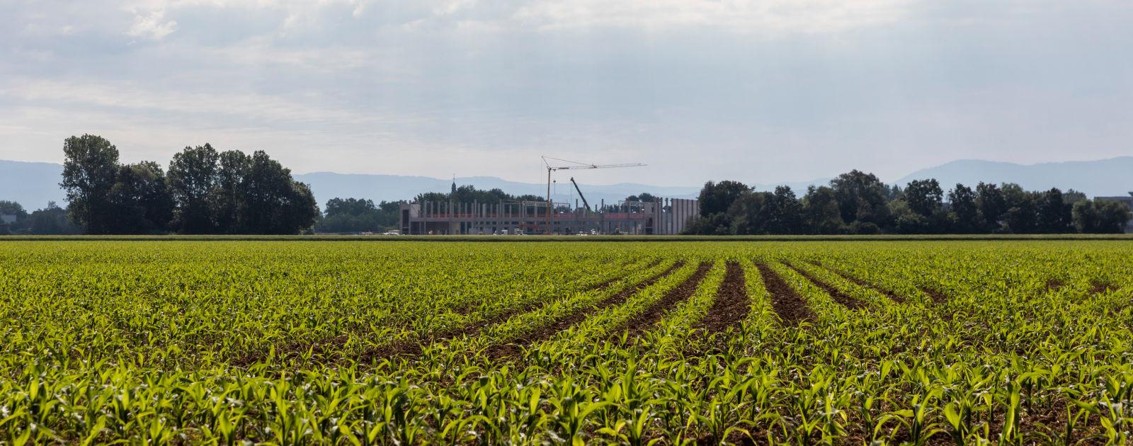 Bepflanztes Feld und im Hintergund eine Baustelle mit Kran